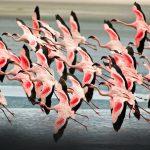 bird-watching-flamingoes