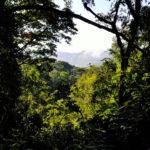 bwindi-forest-mountain-gorilla-trekking