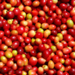 coffee beans raw