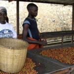 coopac-coffee-rwanda