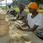 coopac-coffee-rwanda2