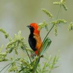 Exotic Birds Africa