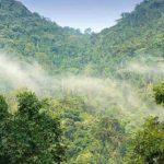 BWINDI-IMPENETRABLE-FOREST-NATIONAL-PARK.