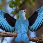 birdwatching-rwanda